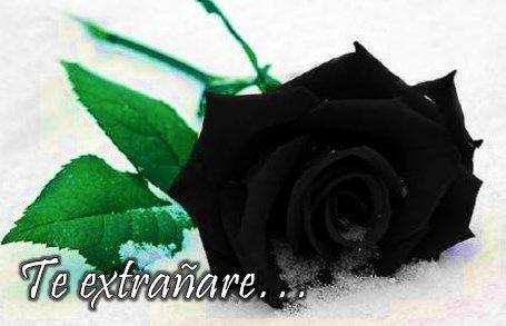 Imágenes de rosas negras de luto