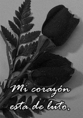 Las Mejores Imágenes De Rosas Negras Para Descargar Gratis