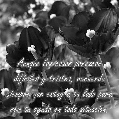 Imágenes de flores negras con frases de luto