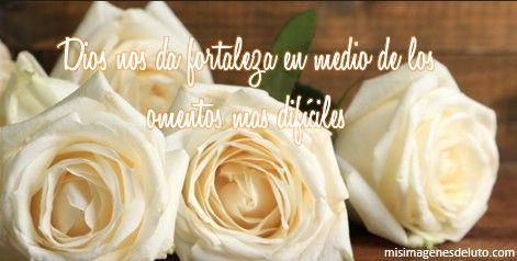 Rosas blancas de condolencia