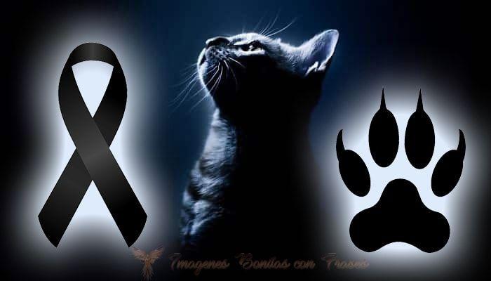 Imagen de luto para mascotas