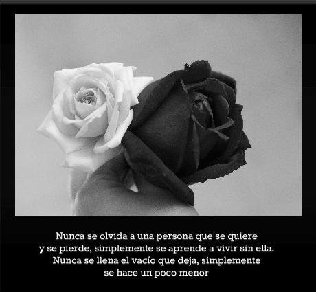 Imágenes de luto con rosas