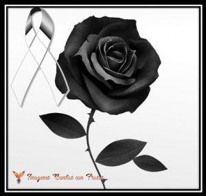 Lazos De Luto Con Una Rosa Negra Para Expresar Duelo Imágenes De Luto