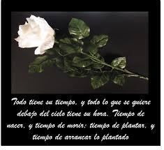 imágenes de rosas blancas con mensajes bonitos de pésame