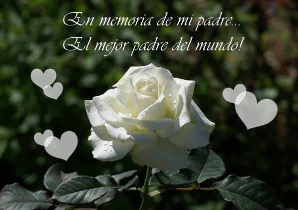 rosas blancas para pésame PADRE