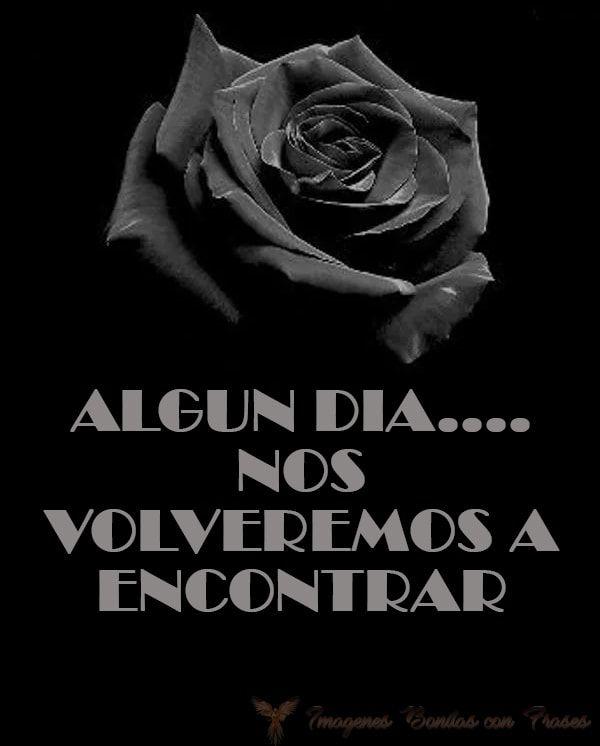 Imágenes de rosas negras con frases tristes