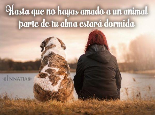 hasta que no hayas amado un animal parte de tu alma estará dormida