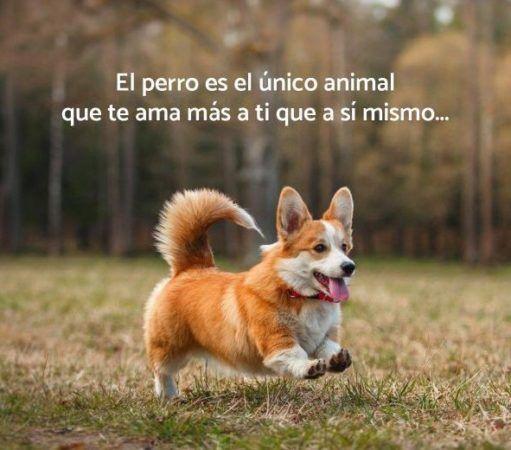 el perro es el único animal que te ama mas a ti que a si mismo