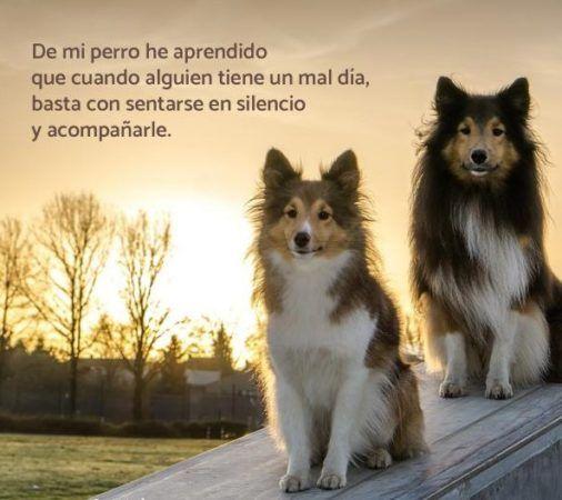 imágenes bonitas sobre perros